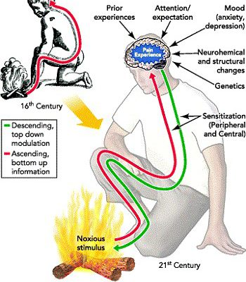 ¿Cómo interpretar el dolor crónico?